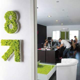 Logo vegetal 8