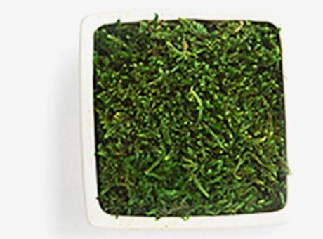 Logo végétal en Mousse des bois